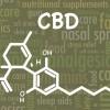 CBD category is gaining momentum