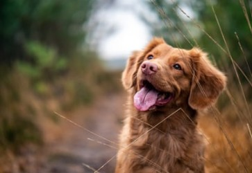 Sales of pet products hurt by COVID-19 pandemic